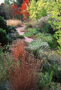 Glorious Colorado-centric woodland border completely conceals the neighboring yard and provides food and cover for an abundance of wildlife. Photo courtesy Lauren Springer Ogden.