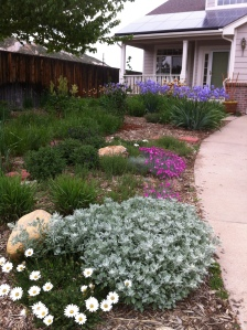 Gleason completely converted her front yard to Xeriscape using Garden-In-A-Box. Photo courtesy of Julie Gleason.