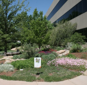 The Xeriscape Garden at Denver Water. Xeriscaping is a cost-effective way to save water and beautify your yard.