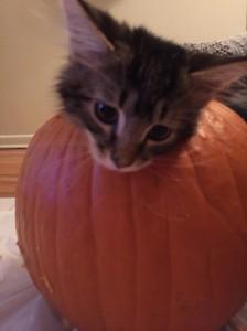 Moose in a pumpkin on National Pumpkin Day.